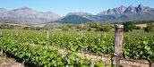 A Wine Drenched Tour Along The Red Route of Paarl, South Africa