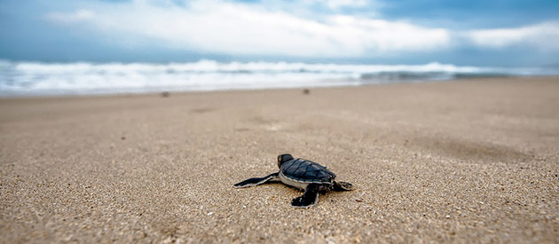 Aquarium appeals to beachgoers to be on the lookout for stranded turtles