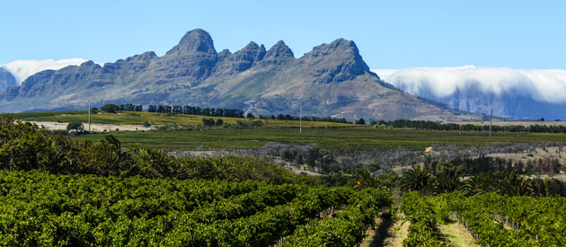 Sample the Good Life in Stellenbosch
