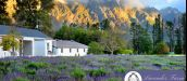 LAVENDER FARM GUEST HOUSE