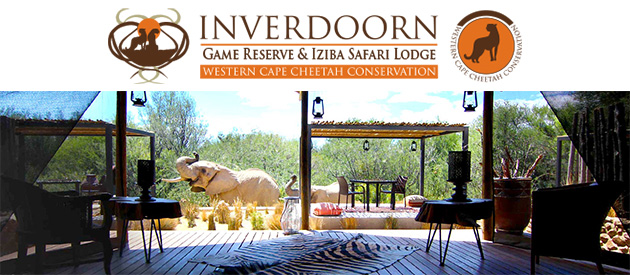safari, safari lodge, game reserve, Big 5, Cape Town, Western Cape, South Africa, wildlife, game drive, cheetah, inverdoorn game lodge, tented camp, guest house, ceres, koue bokkeveld